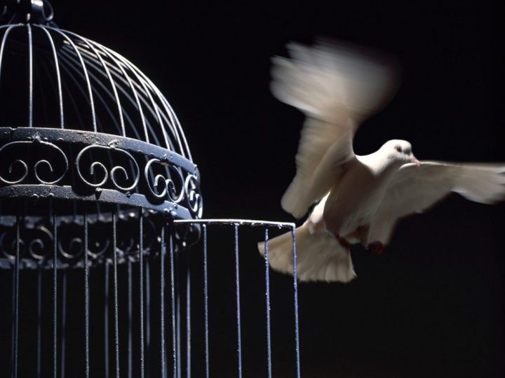 free_bird_fly_dove_cage_open_freedom-oaXu